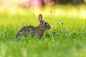 Rabbit (Rona Neri-Bergmann)